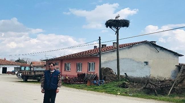 Çanakkale'de ilk leylek yuvaya kondu