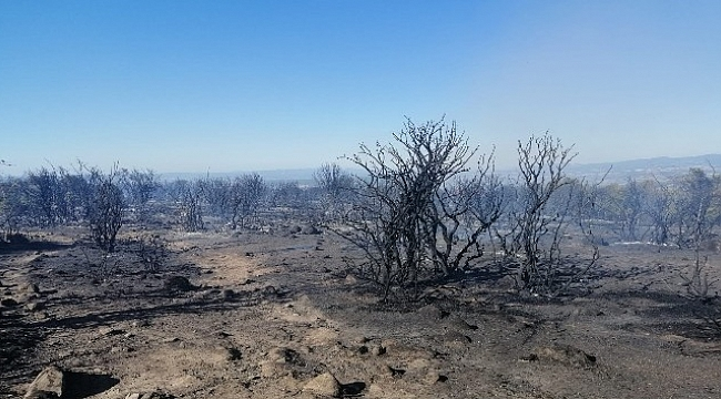 Çanakkale'de makilik yangını