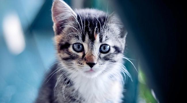 Yazlıkta mahsur kalan 20 kilogramlık kedi kurtarıldı