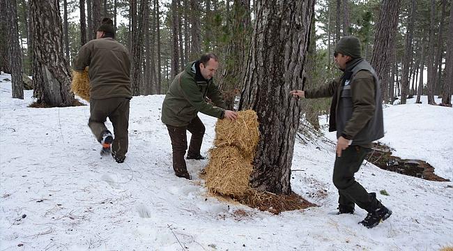 Kazdağları'ndaki yaban hayvanları için yem bırakıldı