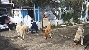 Gelibolu'da sokak hayvanları unutulmadı