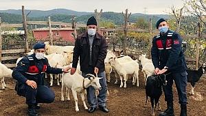 Çanakkale'de ormanda kaybolan koyunlar, drone yardımıyla bulundu