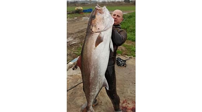 Zıpkınla 'Akdeniz'in Kuzusu' Akya balığı avladı