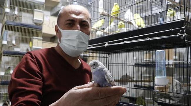 İki çift ile başladı, 50 muhabbet kuşu oldu